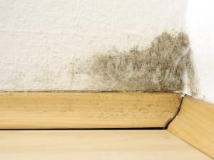 Každá pátá domácnost v Česku bojuje s plísní