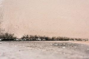Plíseň a bakterie